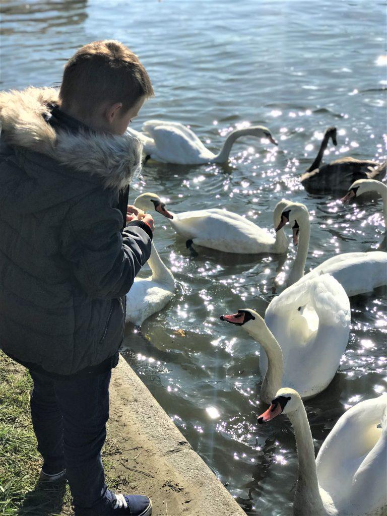 Dobra rada randki kaczki